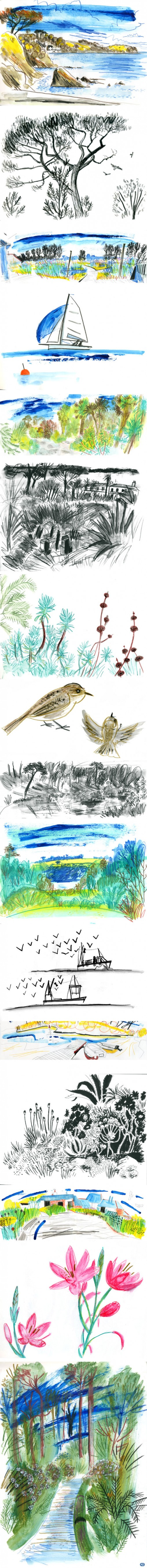 Sketchbook of Trebah Gardens, Helford River, Kestle Barton and Gyllyngdune Gardens in Falmouth