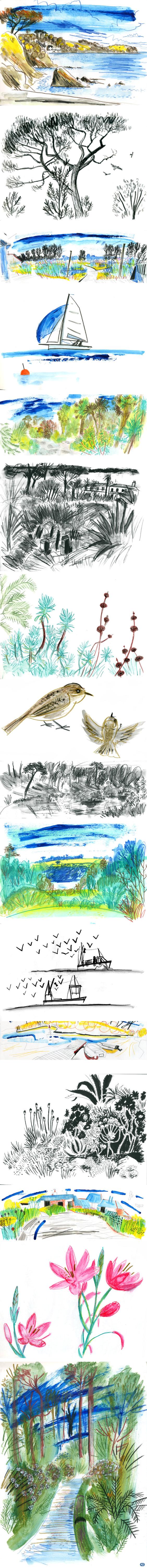 Sketchbook of Trebah Gardens, Helford River, Kestle Barton and Gyllyngdune Gardens in Falmouth
