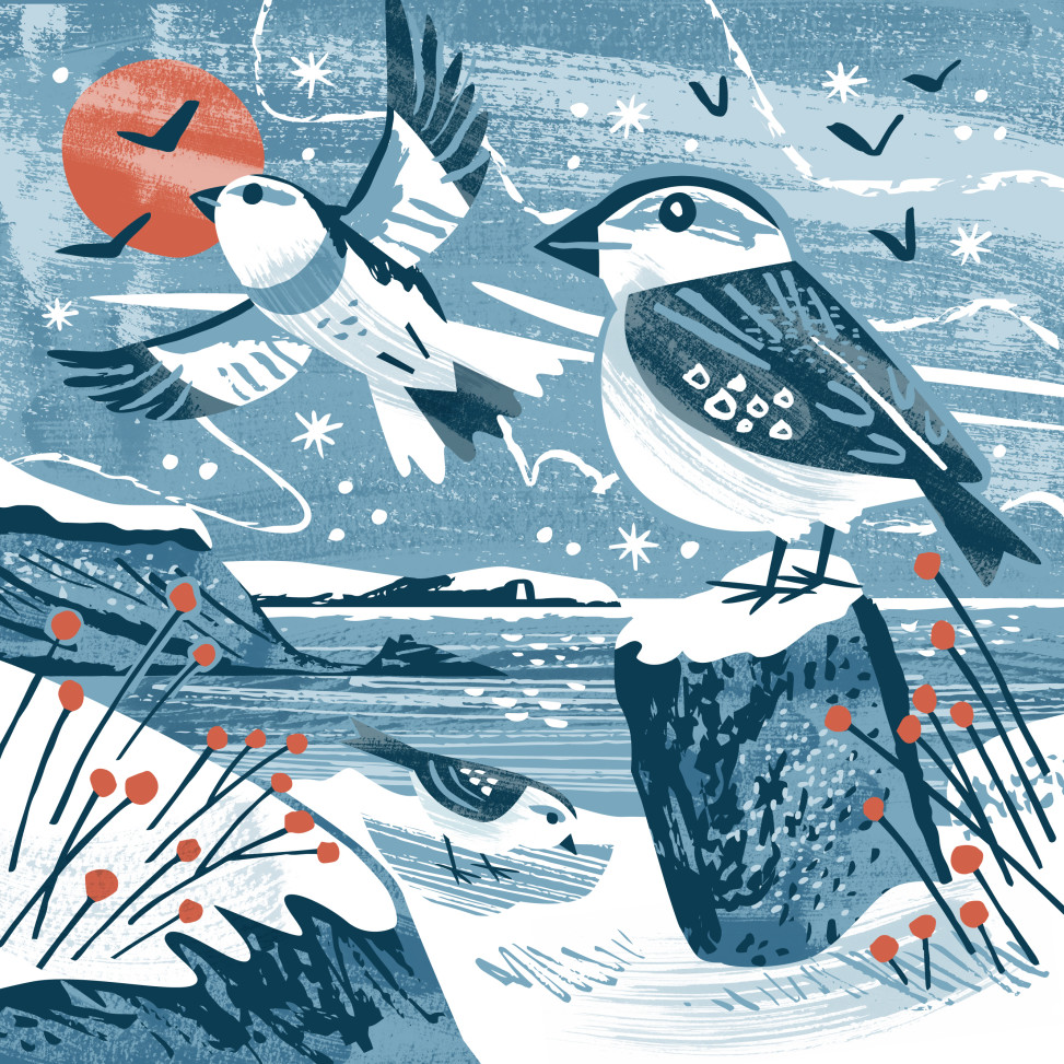 Snow buntings Christmas card by Matt Johnson for Seasalt Cornwall