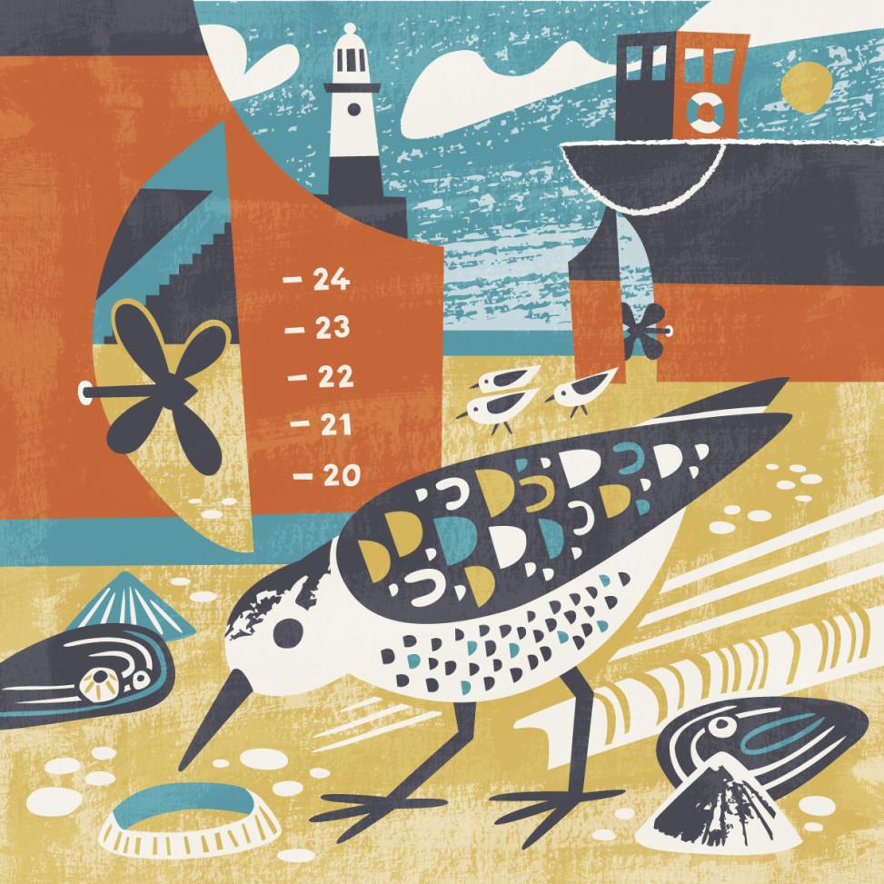 St Ives Sanderling wading bird illustration by Matt Johnson