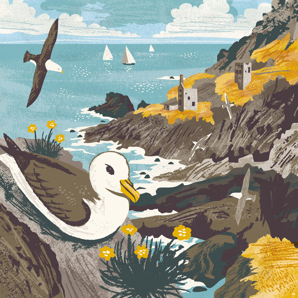 Botallack Fulmar illustration by Matt Johnson for Seasalt Cornwall