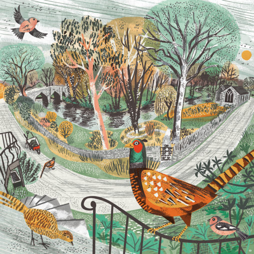 Hellandbridge pheasants illustration by Matt Johnson