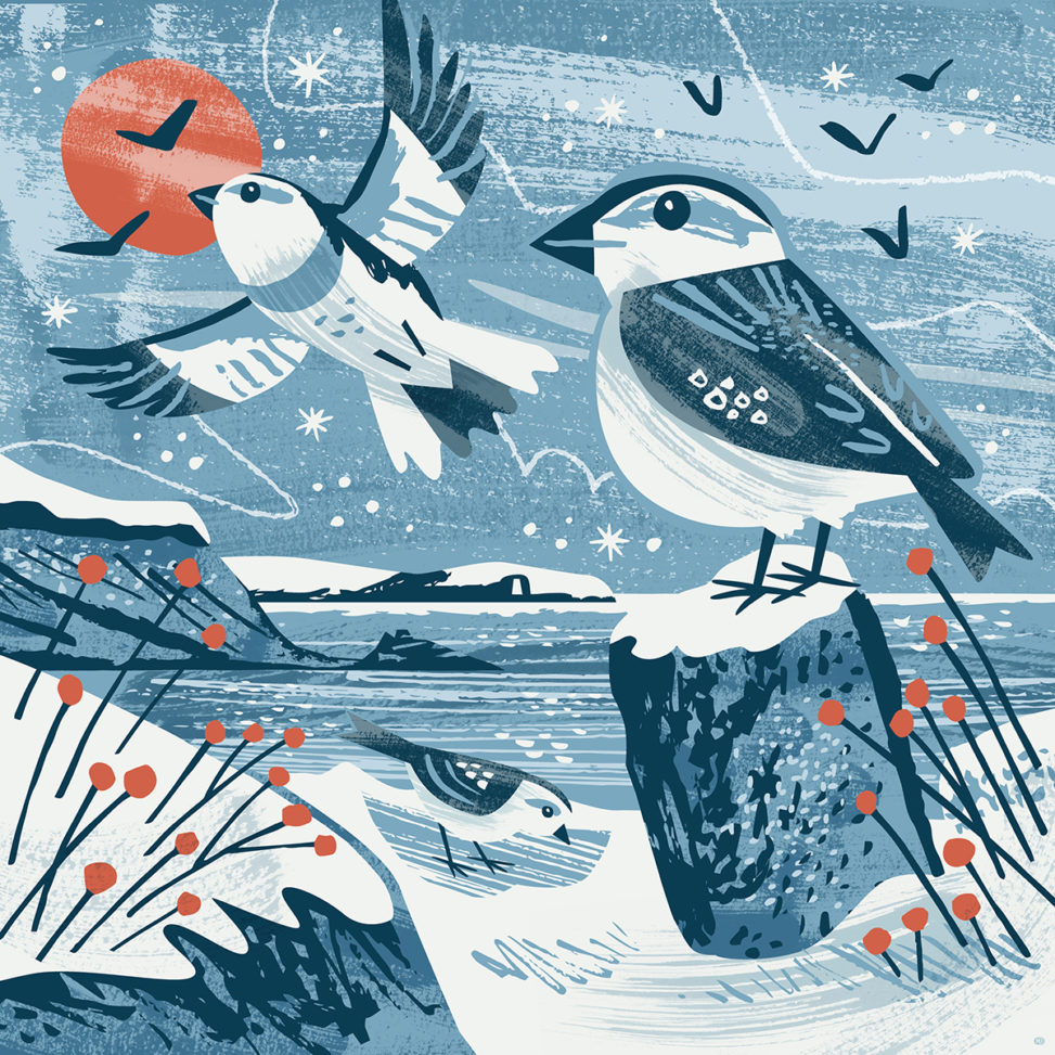 Maenporth snow buntings illustration by Matt Johnson