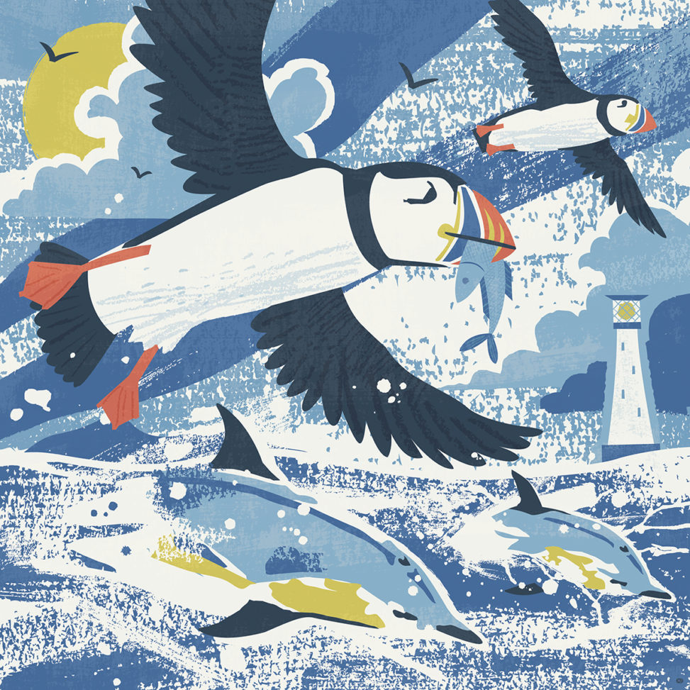 Scilly Puffins and Dolphins illustration by Matt Johnson