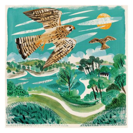 Helford Kestrels collage illustration by Matt Johnson