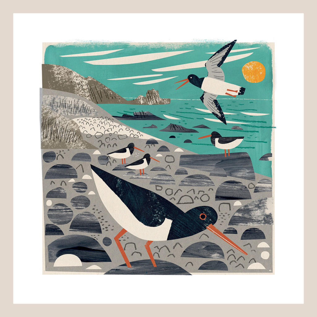 St Loy Cove Oystercatchers art print by Matt Johnson