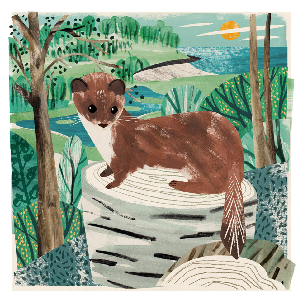 Collage illustration of stoat and Porthluney Cove in Cornwall by Matt Johnson