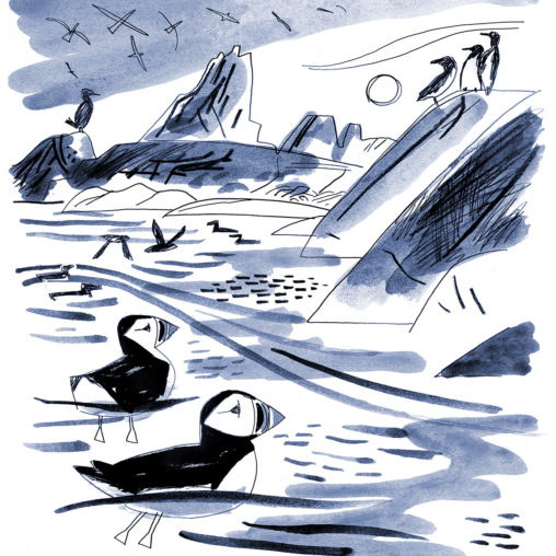 Sketch of puffins, guillemots, razorbills and shags on the Western Rocks, Isles of Scilly by Matt Johnson