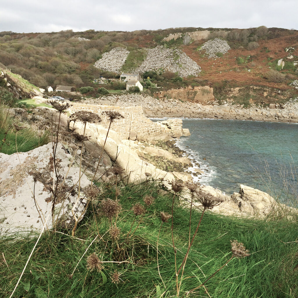 Lamorna Cove seed heads