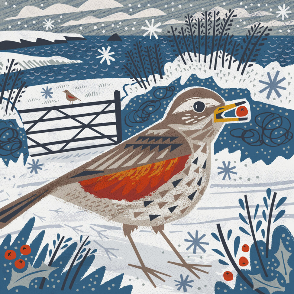 Gerrans Bay Redwing Christmas Card by Matt Johnson