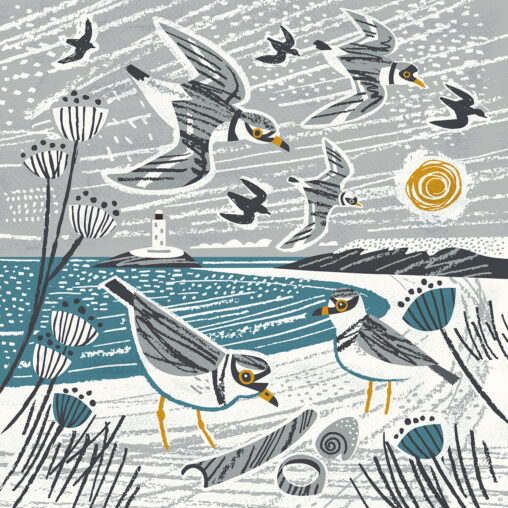 Godrevy winter plovers illustration by Matt Johnson