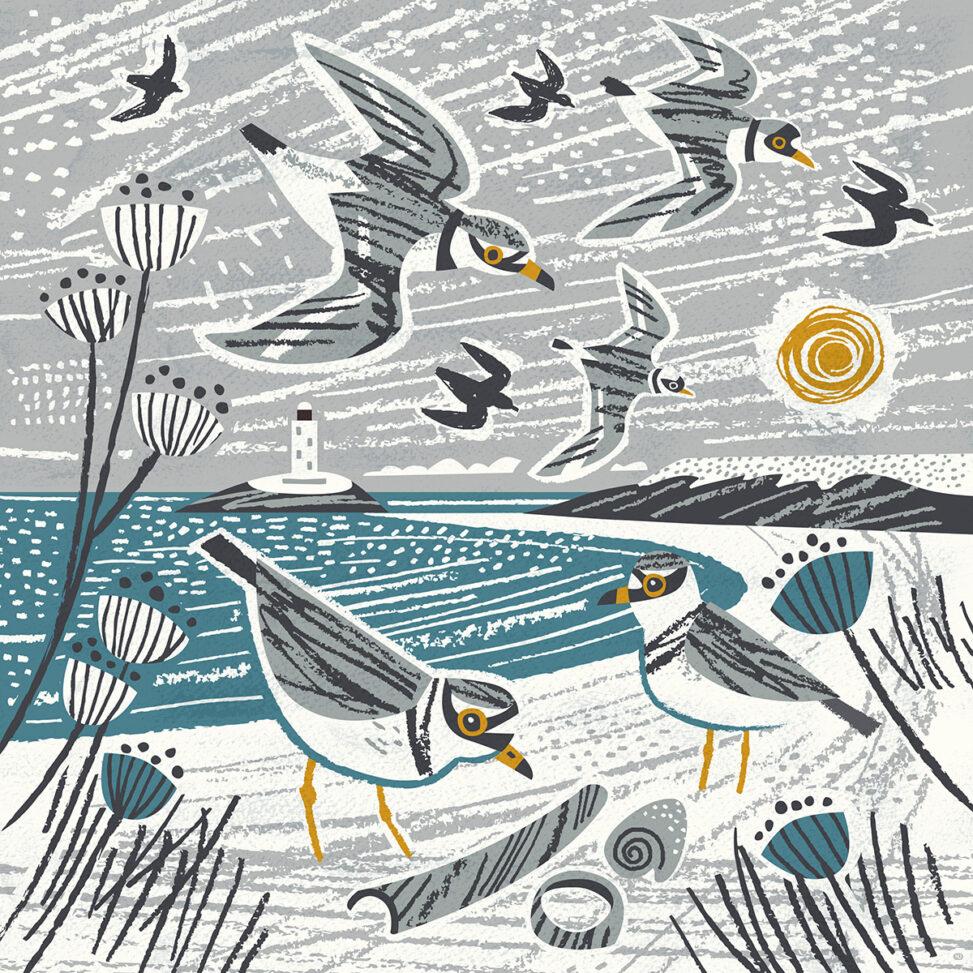 Godrevy winter plovers illustration by Matt Johnson